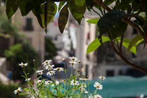 Giardino ed Esterni (24)